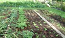 vegetable-gardens-2_375x223_thumb.jpg